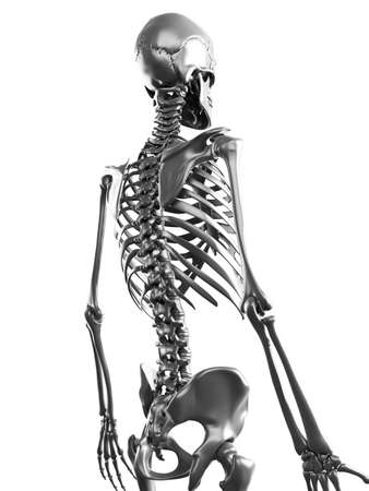 human bones: 3d rendered illustration of a metal skeleton