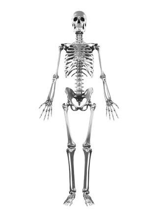 scheletro umano: 3d ha reso l'illustrazione di uno scheletro in metallo