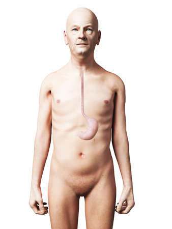 3d nude: 3d rendered illustration of an old man - stomach Stock Photo