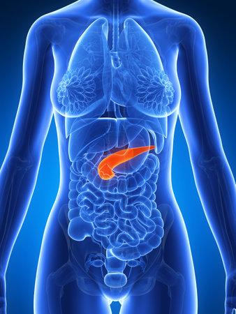 pancreatitis: 3d rendered illustration of the female anatomy - pancreas