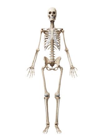 huesos humanos: 3d rindió la ilustración del esqueleto Foto de archivo