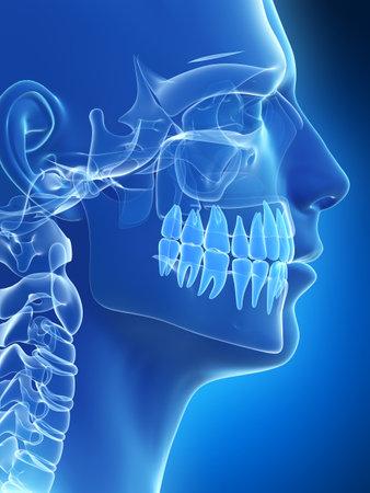 x ray skeleton: 3d rendered illustration of the skull