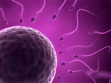 human sperm: 3d rendered illustration of an egg cell and sperm Stock Photo