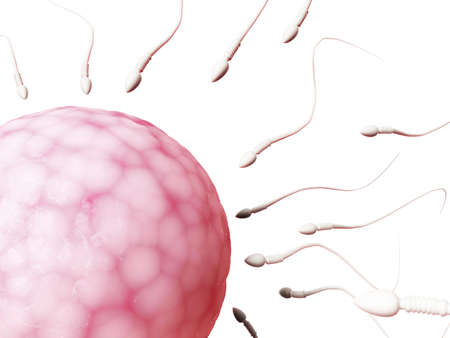 fertile: 3d rendered illustration of an egg cell and sperm Stock Photo