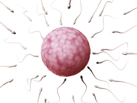 sperm cell: 3d rendered illustration of an egg cell and sperm Stock Photo