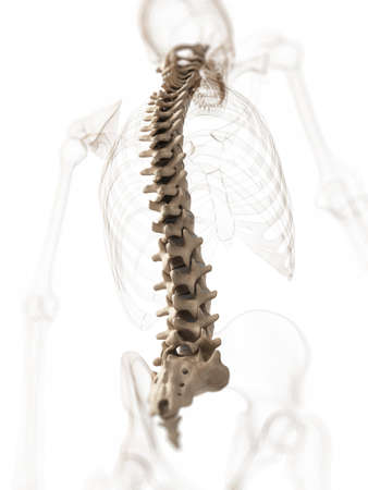 3d rendered illustration of a spine Stock Photo