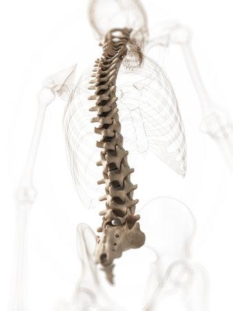 columna vertebral: 3d rindi� la ilustraci�n de una columna Foto de archivo
