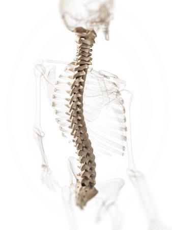 medula espinal: 3d rindi� la ilustraci�n de una columna Foto de archivo