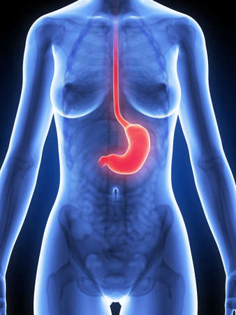 ulc�re: 3d illustration rendu de l'estomac f�minin Banque d'images