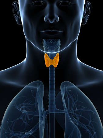 gland: 3d rendered illustration of the thyroid gland Stock Photo