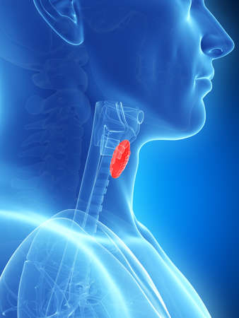throat: 3d rendered illustration of the thyroid gland Stock Photo