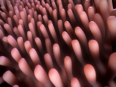 villi: 3d rendered illustration of the colon villi