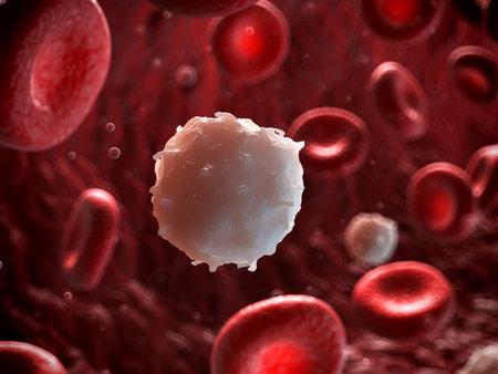 vasos sanguineos: 3d rindi� la ilustraci�n de un gl�bulo blanco