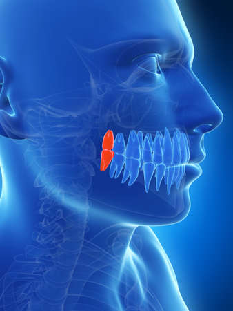 impacted: 3d rendered illustration of the wisdom teeth Stock Photo