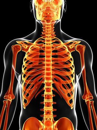 男性の骨格の 3 d レンダリングされた図