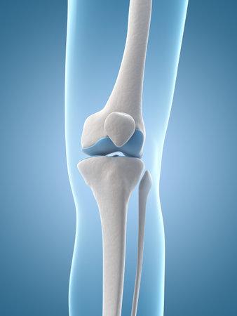 medische illustratie van de knie Stockfoto