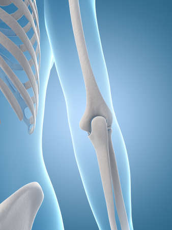 medical illustration of the elbow joint