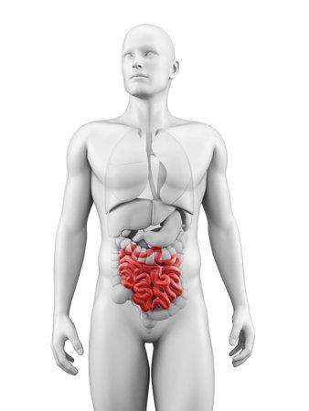 medical illustration of the small intestine Stock Illustration - 22818773
