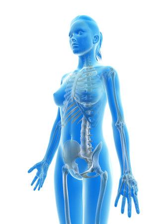 여성 골격의 렌더링 된 그림