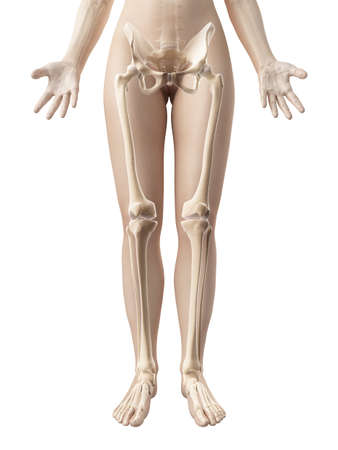 Huesos de la pierna femenina Foto de archivo - 23222253