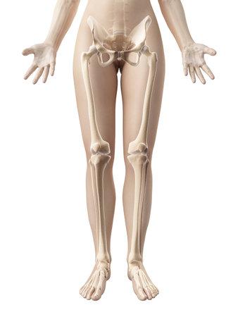 vrouwelijke been botten Stockfoto