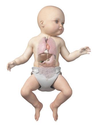 아기의 장기를 보여주는 의료 영상 스톡 콘텐츠