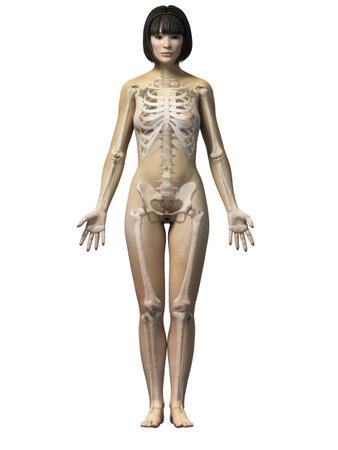 l'anatomie d'une femme asiatique - squelette