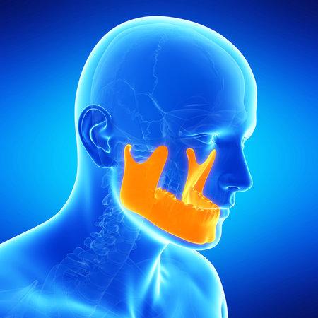 illustration médical de l'os de la mâchoire
