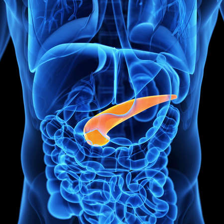 medical 3d illustration of the pancreas