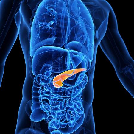 膵臓の医療イラスト