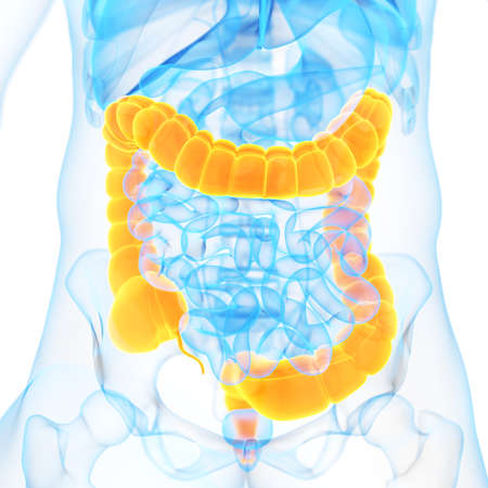 medical 3d illustration of the colon