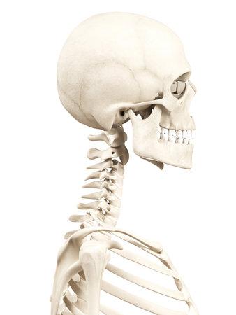 人間の頭蓋骨の医療の 3 d イラストレーション