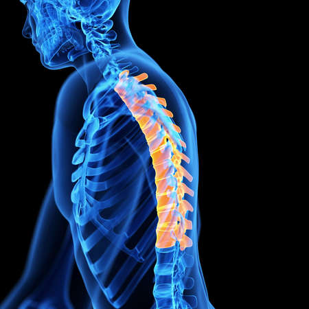 Medical 3d Illustration Of The Thoracic Spine Stock Photo Picture