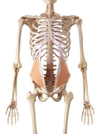 内部斜めの医療の正確なイラスト 写真素材