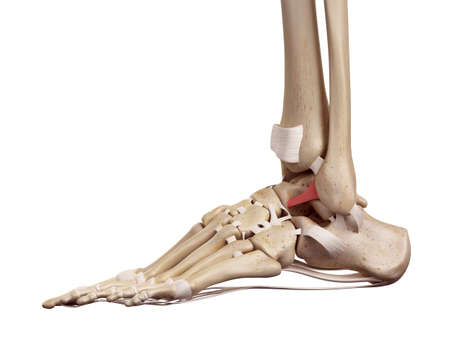 medical accurate illustration of the anterior talofibular ligament Stock Photo