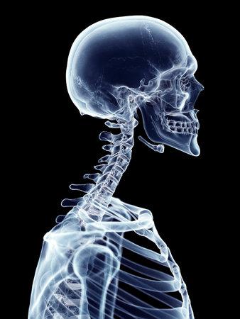 ilustración médica precisa de la columna cervical