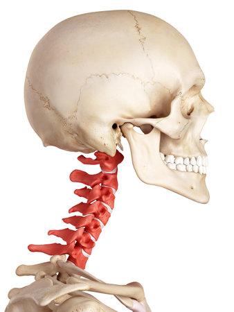 ilustración médica precisa de la columna cervical Foto de archivo