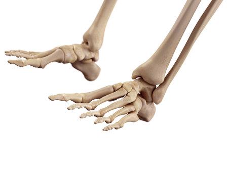 足骨の正確な医療のイラスト 写真素材