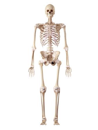 medical accurate illustration of the Zdjęcie Seryjne