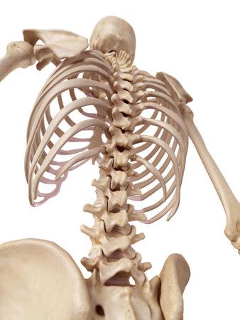 脊椎医療の正確なイラスト