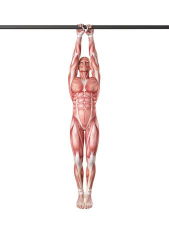 exercise illustration - close grip pull ups