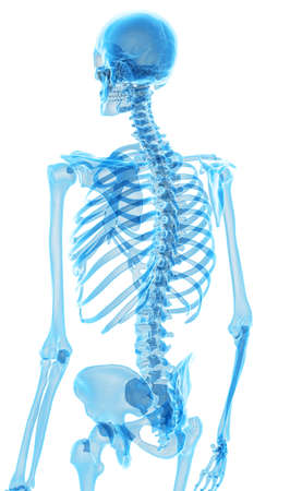 medically accurate illustration of the skeletal back Stock Photo