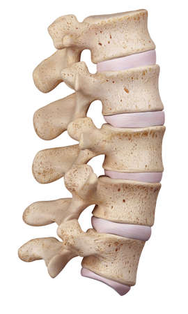 medically accurate illustration of the lumbar spine Foto de archivo