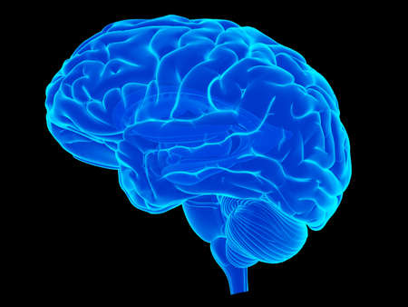 人間の脳の医学的に正確な図
