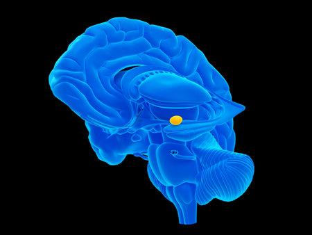 편도선 몸체의 의학적으로 정확한 일러스트레이션 스톡 콘텐츠