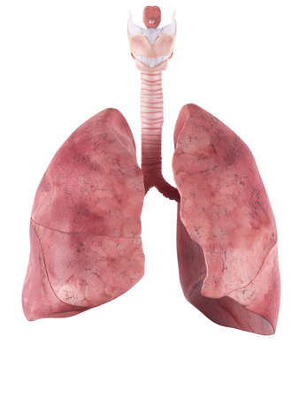 medically accurate illustration of the lung 免版税图像