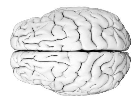 Illustrazione medico accurato del cervello umano Archivio Fotografico - 43656836