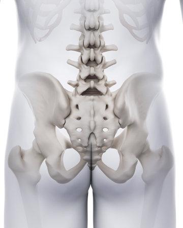 천골의 의학적으로 정확한 그림 스톡 콘텐츠