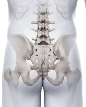 medically accurate illustration of the sacrum