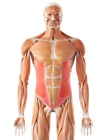 exernal 경사의 의학적으로 정확한 그림